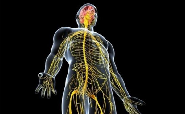 Akupunktur Uygulamasının Otonom Sinir Sistemine Etkileri